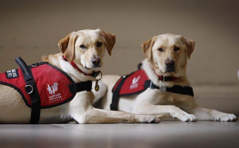 Duties under the Equality Act 2010 for taxi and private hire drivers – Assistance Dogs